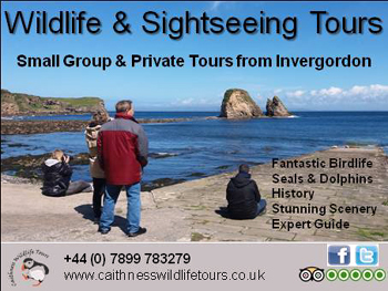 Caithness Wildlife Tours